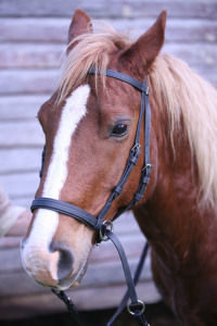 nose position for a bitless bridle