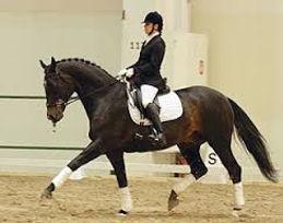bitless horse doing dressage