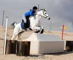 bitless horse jumping