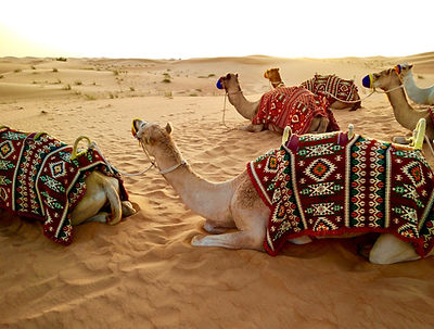 Yoga-Urlaub - Dubai, Vereinigte Arabische Emirate
