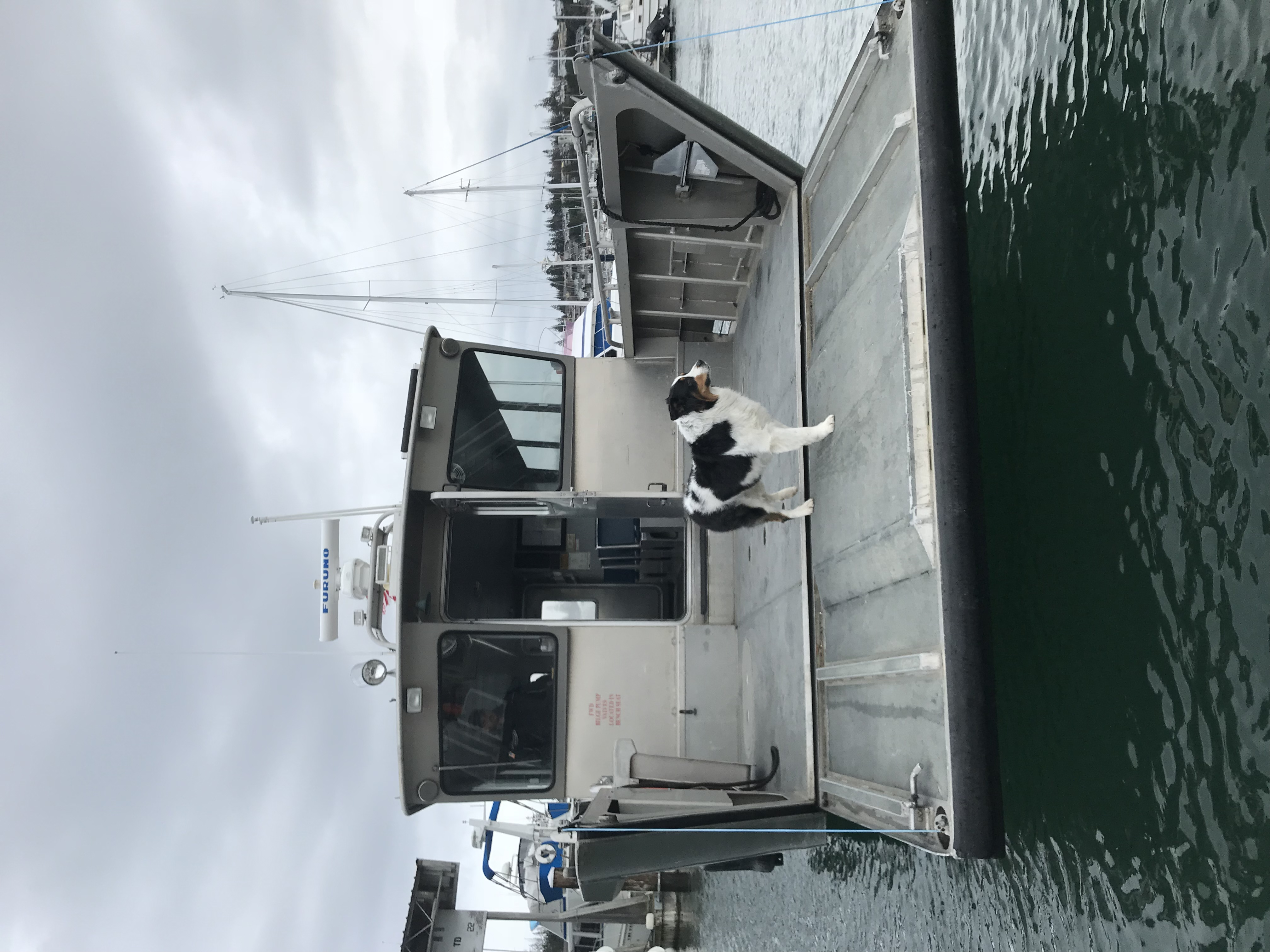 Bow in to a dock