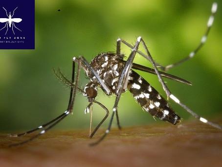 Conosci il tuo nemico : il genere Aedes