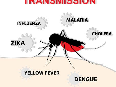 """Coronavirus, Pier Luigi Lopalco a Tagadà: """"Le zanzare aumentano il contagio?"""". Qual è la certezza"""