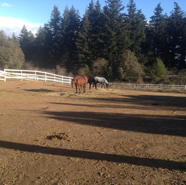 HORSES, PASTURE FEEDING