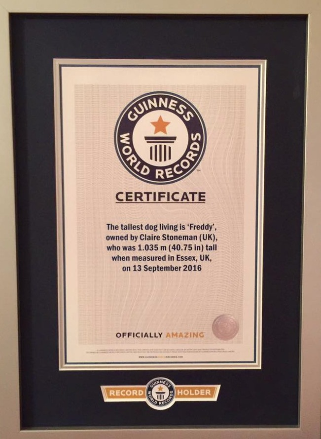 Guiness world record certificate
