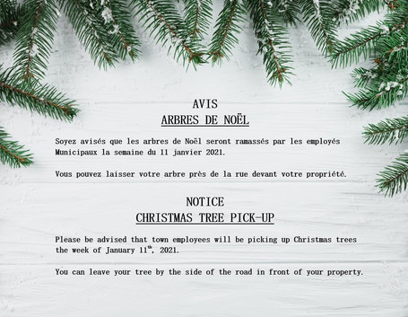 Ramassage d'arbre de Noël / Christmas tree pickup