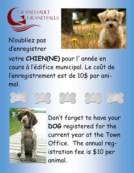 License de chien / Dog Tag