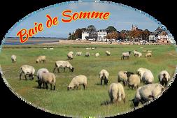 Moutons  ref : BDS103