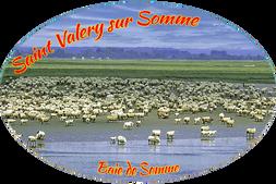 Moutons  ref : STV103