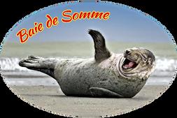 Phoque  ref : BDS105