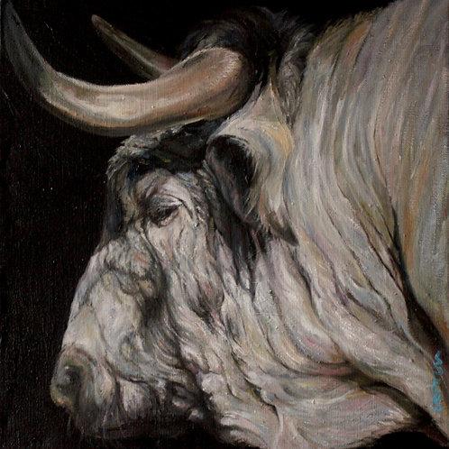 17071-TORO DE PROFIL-huile sur toile de lin-40x40cm