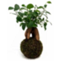 Plante2.jpg