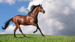 Horse-blue-sky-and-grass-wallpaper
