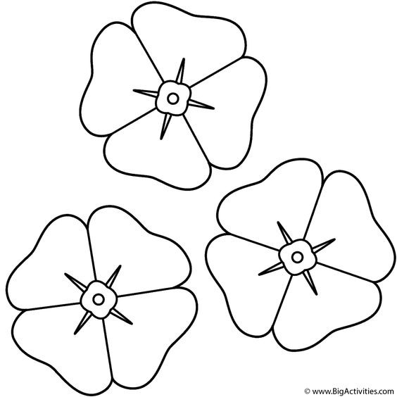 Poppies - Coloring Page (Anzac Day)