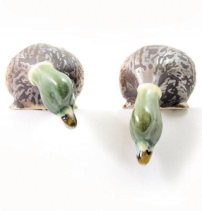Dzikie kaczki z opuszczoną głową