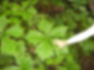 hand and leaf.jpg