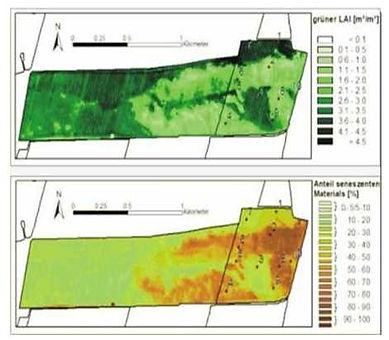 Шкала биомассы растений