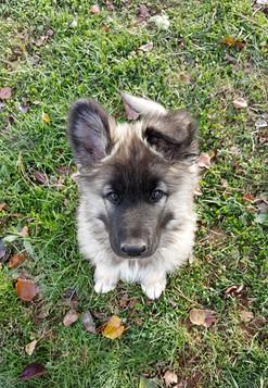 Boone at 9 weeks