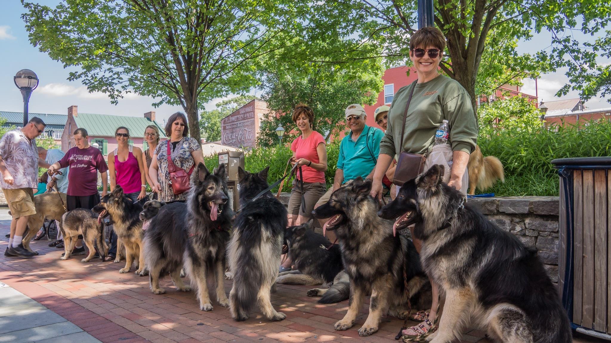 Shiloh Shepherd breeders | 15 | Catoctin Shilohs & Shepherds