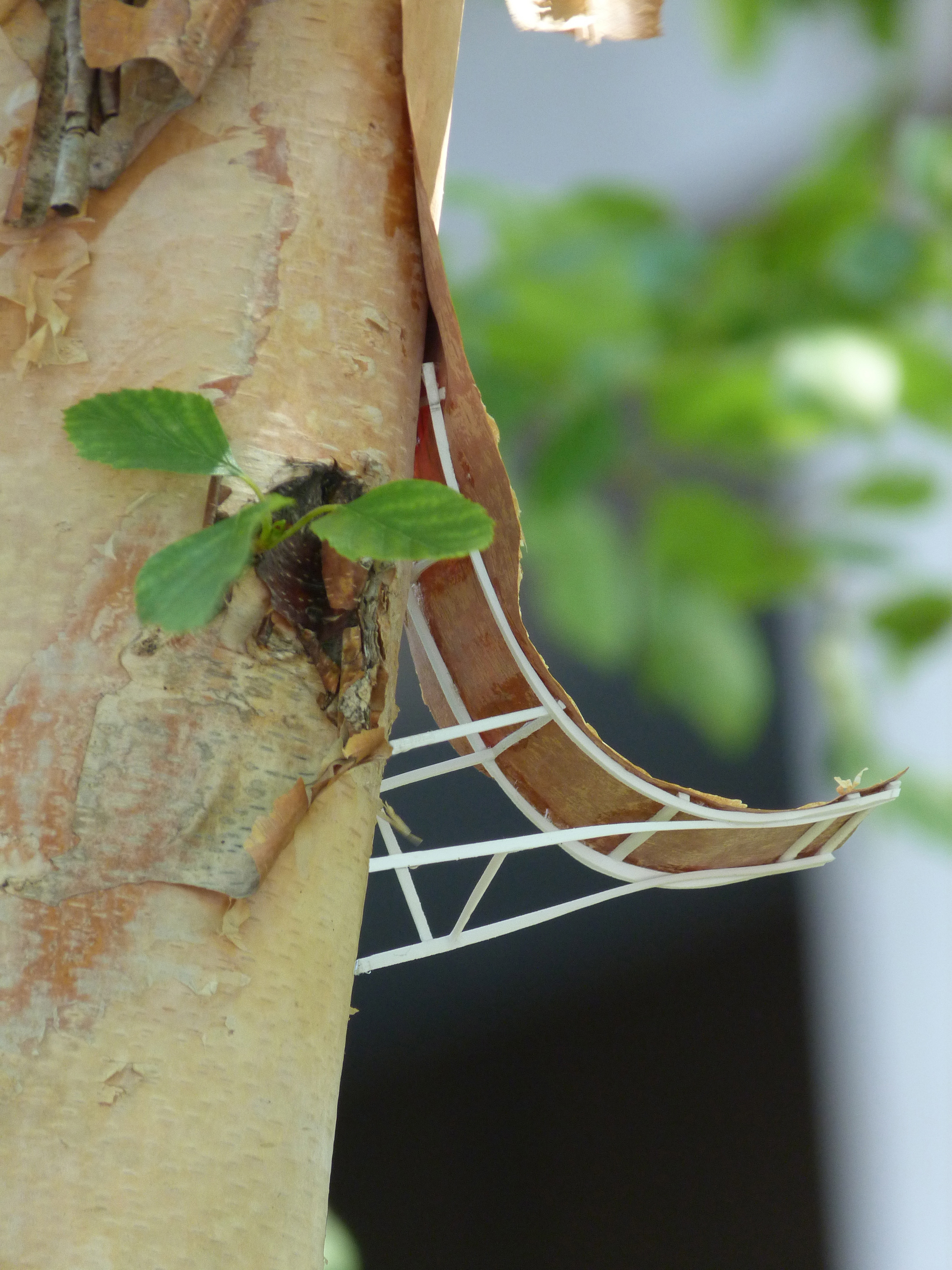 8. TREE ARCHITECTURE I, plant, plastic