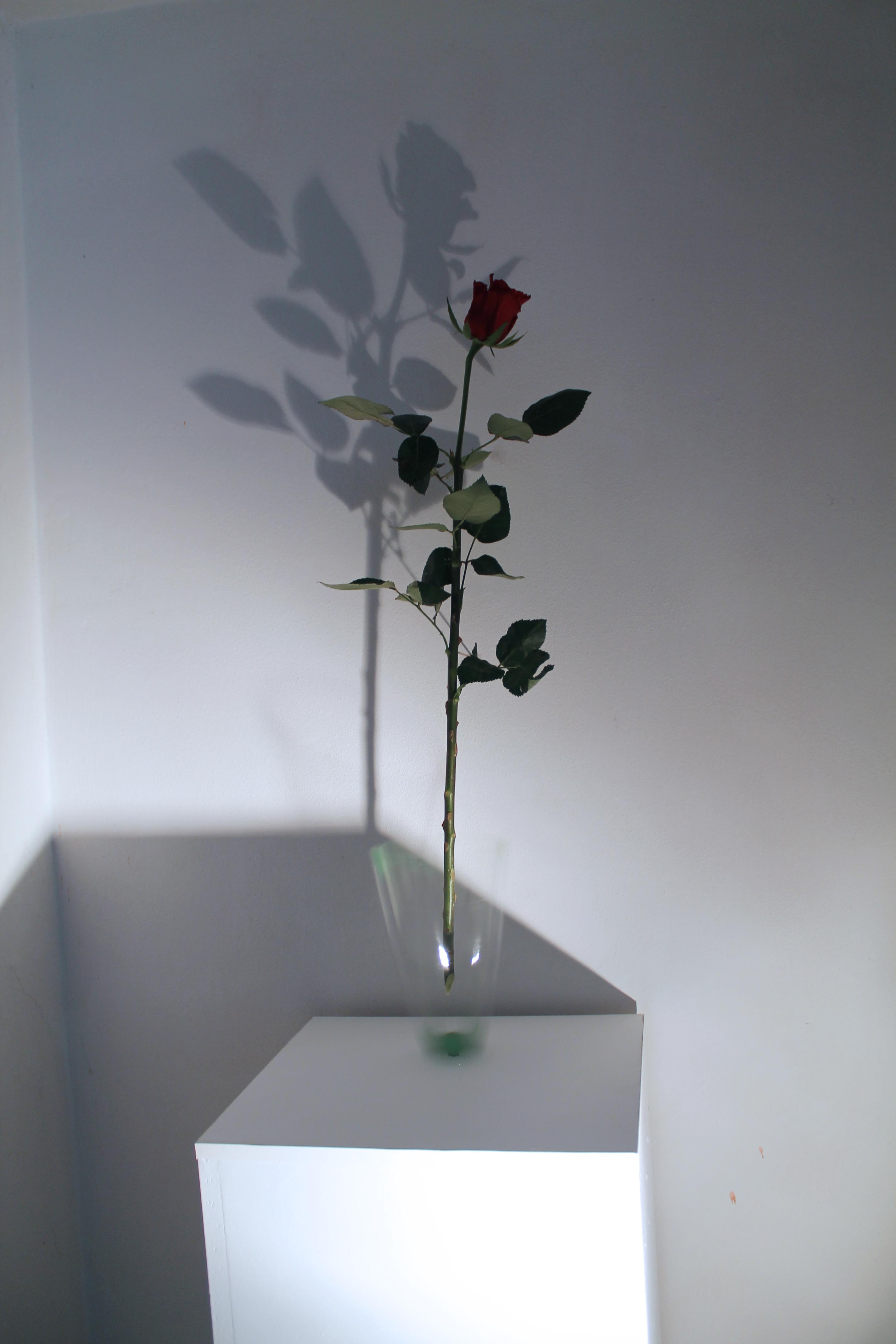 7. Váza, 2015