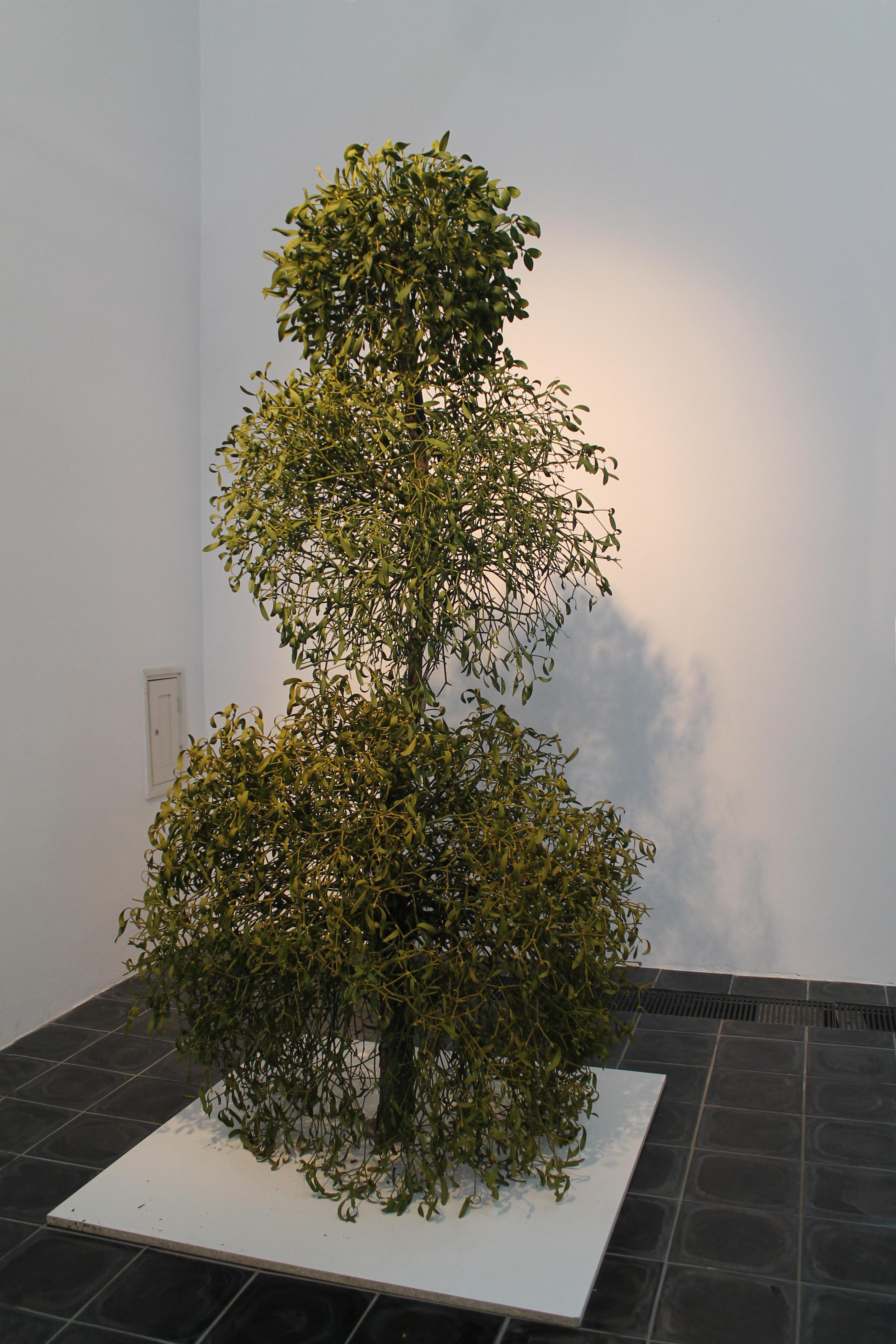 Snowman´s_End__-__mistletoe