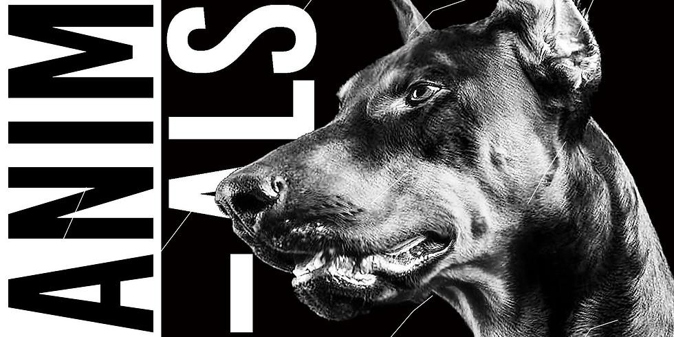 Animals ◊ House to techno Vol.6