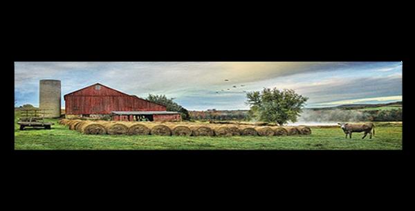 Hay-Harvest-30803