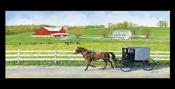 Amish homestead - 20428