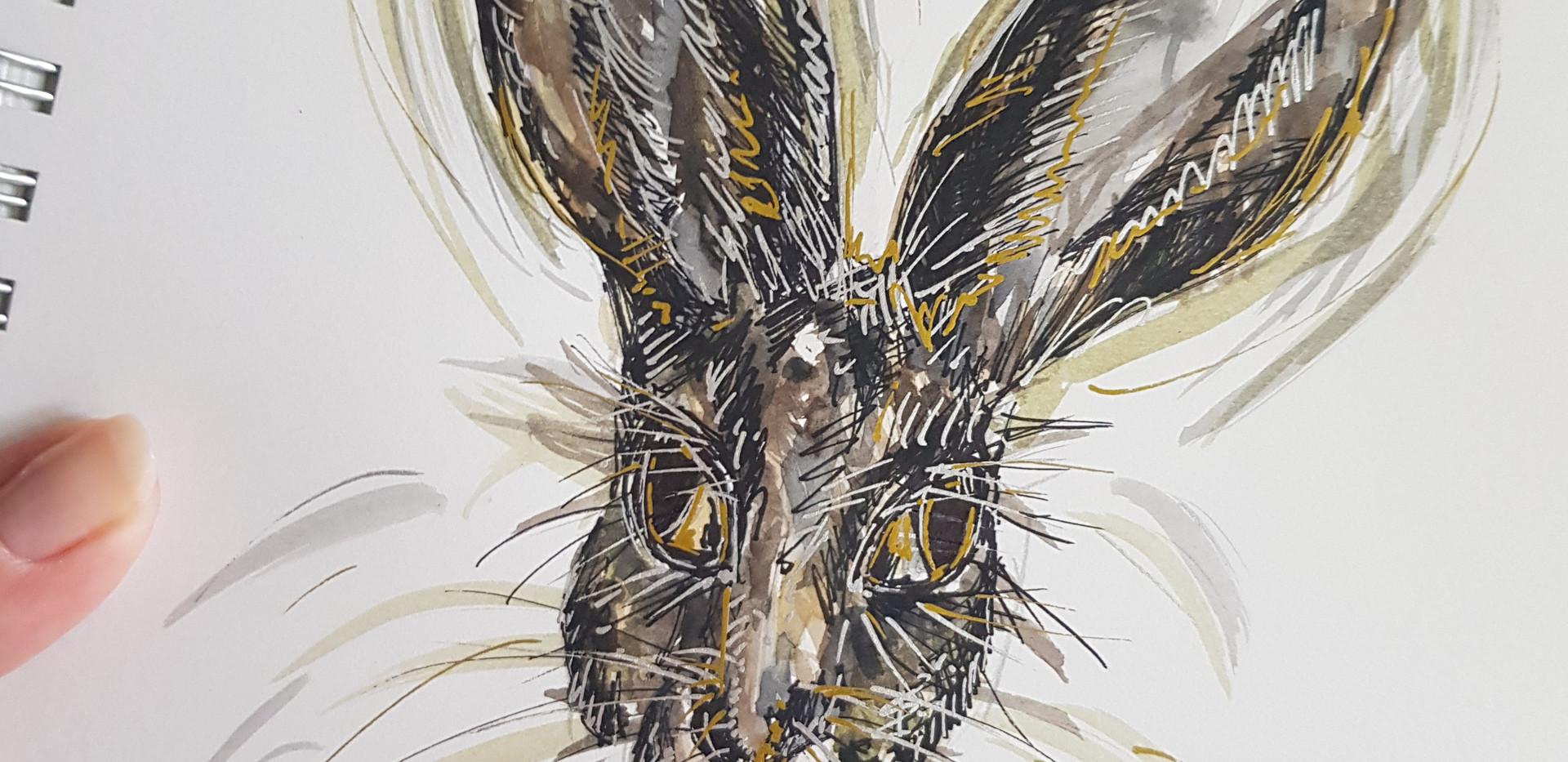 Rabbit Series 2