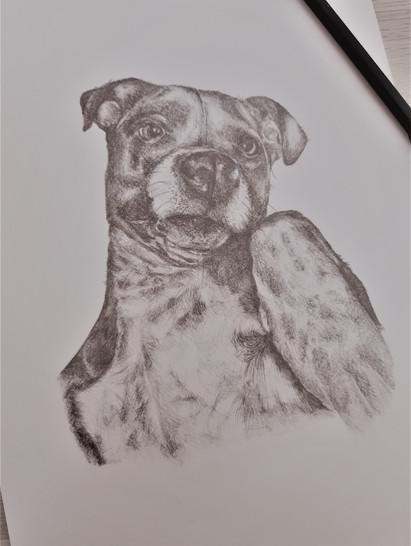 Dog Portrait for Sale on Etsy
