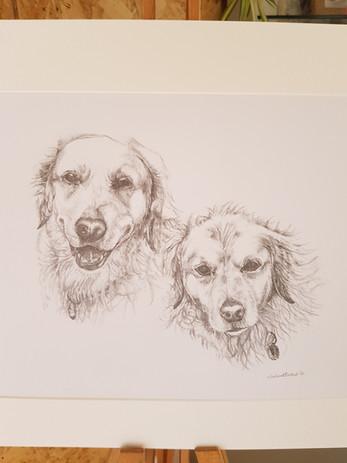 Golden Retriever pencil portrait commission