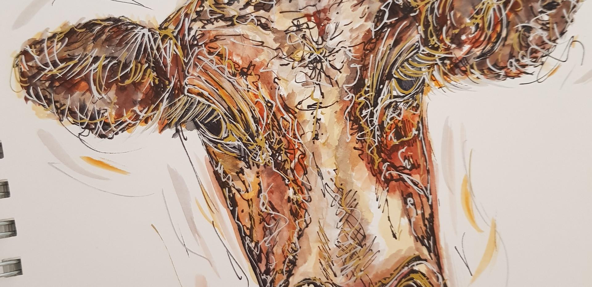 'Moo' Cow