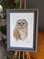 Owlie - For Sale