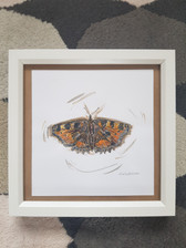 Butterfly - For Sale