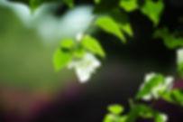 nature-photos-857956_1920.jpg