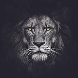 Lion_Cover.jpg