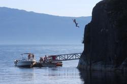 Freedom Jumper