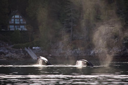 Synchronized Swimming!