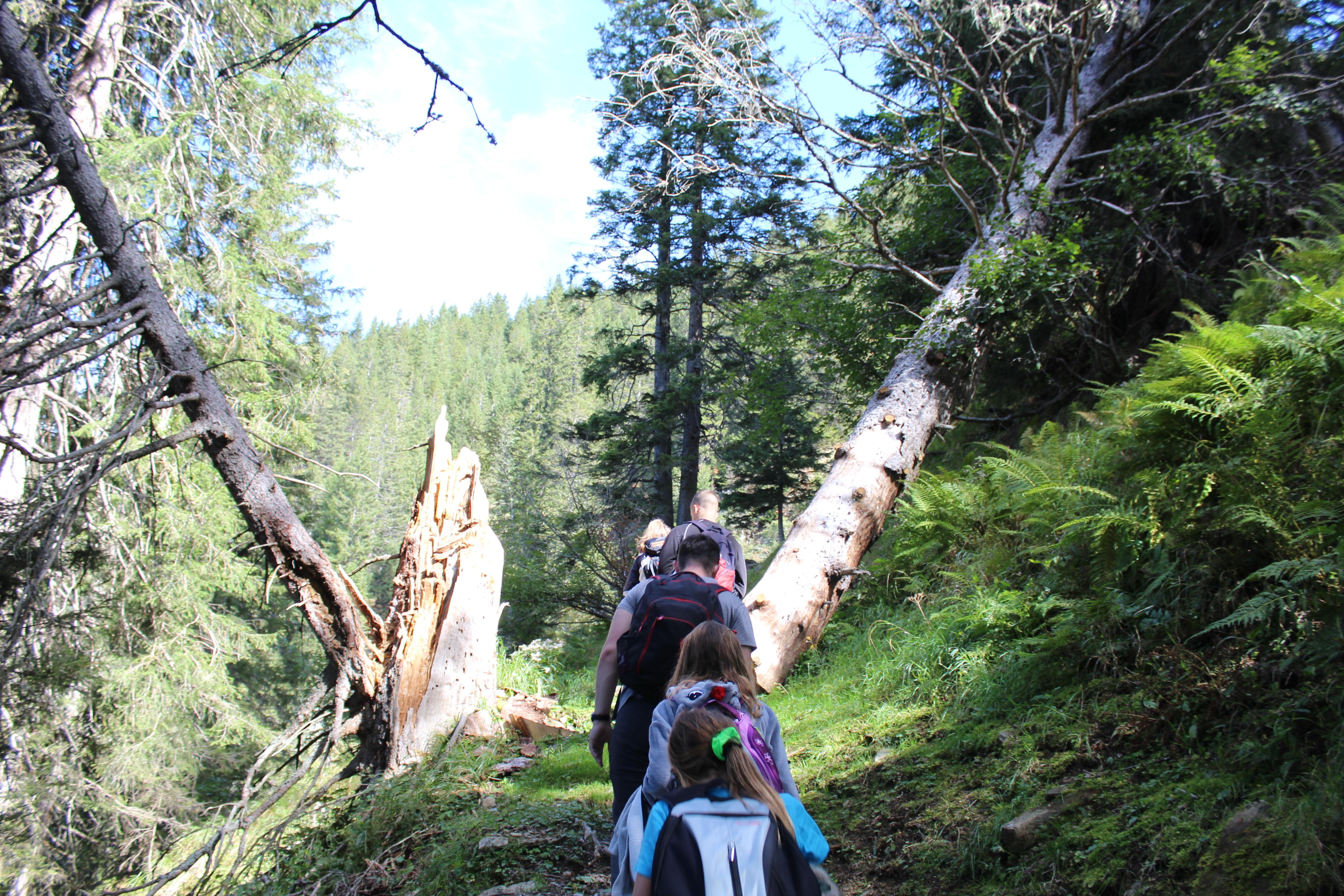 Wanderung mit kaputtem Baum