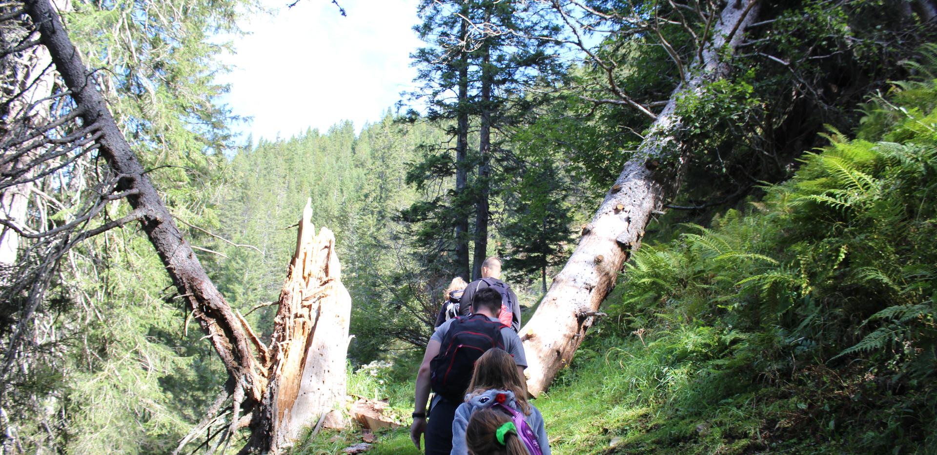 Wanderung mit kaputtem Baum.JPG