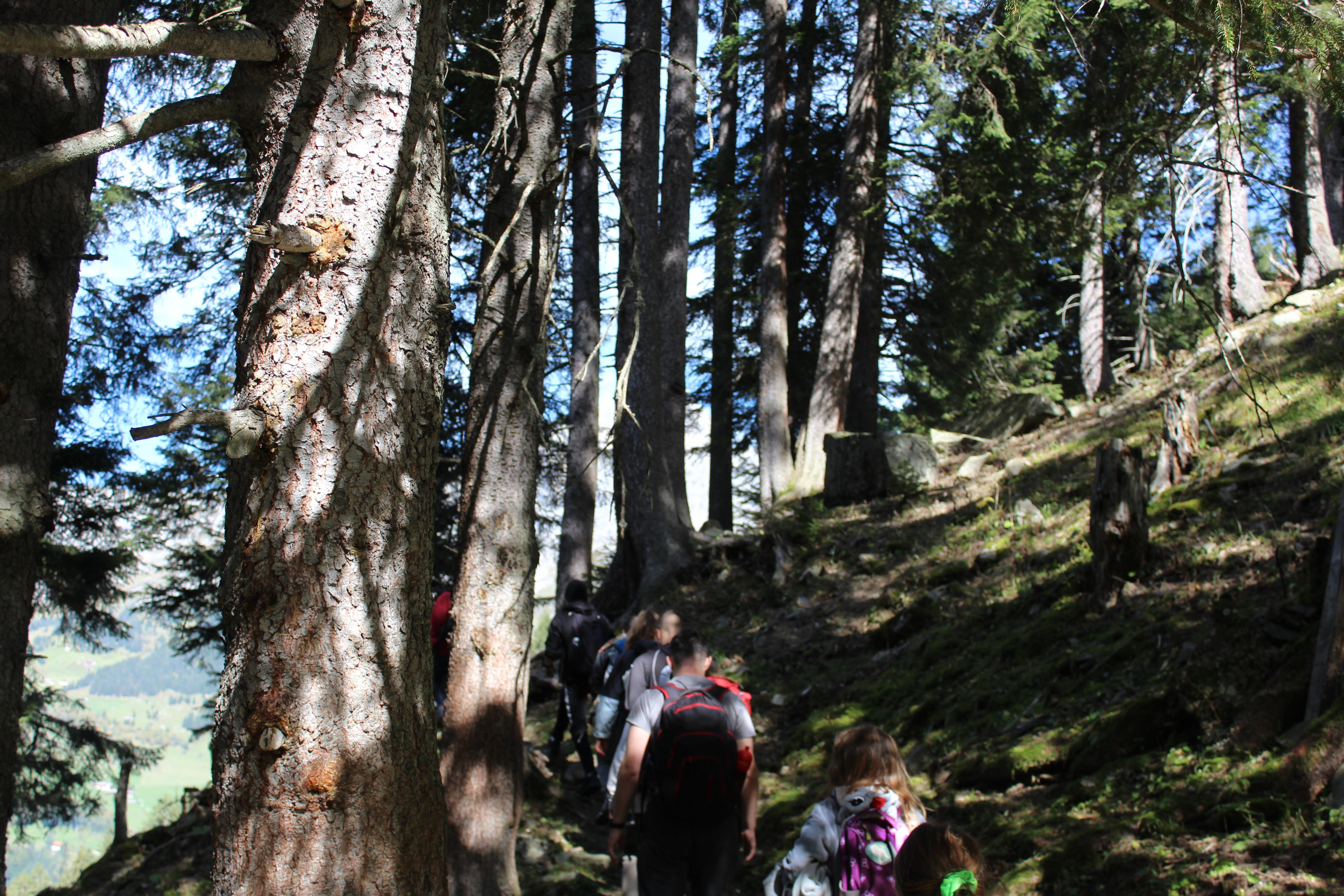 Wanderung Wald