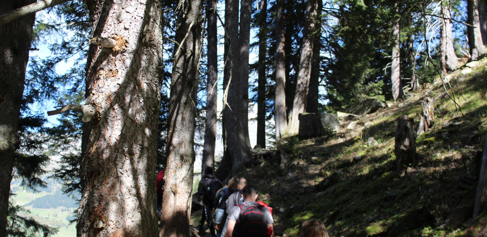 Wanderung Wald.JPG