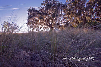 WGrass Oak Sunset.jpg