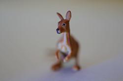 Miniature Kangaroo