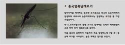 중국얼룩날개모기