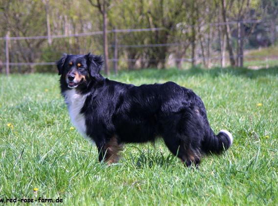 Hunde 2104xs.jpg