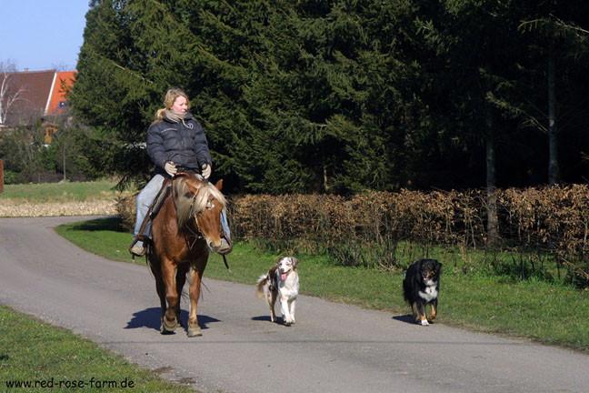 Hunde 1517xs.jpg