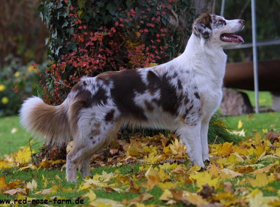 Hunde 3416gxs.jpg