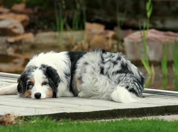 Hunde April 2012 015 (2)xs.jpg